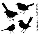 Stock vector birds silhouette 161551550