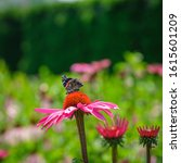 Red Admiral Butterfly  Seen In...