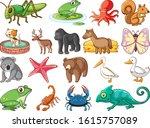 Large Set Of Wildlife With Many ...