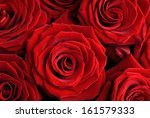 Stock photo closeup of a beautiful red roses floral background 161579333