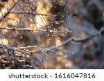 Frozen Branch Blizzard Close Up....
