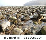 View of the rocky seashore at the retreat of the sea.