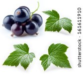 Black Currant And Leaves...