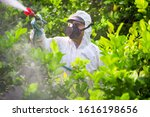 Farmer man spraying fumigating...