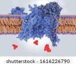 antidepressive drug ... | Shutterstock . vector #1616226790