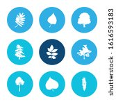 flora icon set and ash leaf... | Shutterstock .eps vector #1616593183