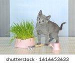 Kitten  Skill One   Cat Farmer...