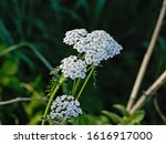 Sunny Bright White Common...