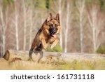 walk with a german shepherd | Shutterstock . vector #161731118