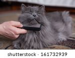 Stock photo cat is being combed 161732939