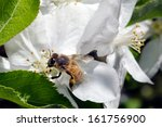 bee gathering honey from a