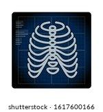 x ray ribcage with pelvic bone  ... | Shutterstock .eps vector #1617600166