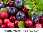 blueberry and cowberry with... | Shutterstock . vector #161762564