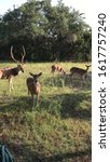 Small photo of Wild outside deer fawn doe buck nature