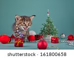 cute little kitten wearing a... | Shutterstock . vector #161800658