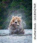 The Kamchatka Brown Bear  Ursus ...