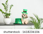 Cute Dog With Green Hat At Home....