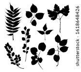 black prints of leaves of trees ... | Shutterstock .eps vector #1618648426