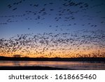 Snow geese 'blastoff' during...