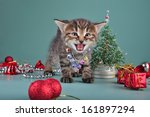 cute little kitten wearing a... | Shutterstock . vector #161897294
