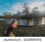 Shot Of A Curious Goose