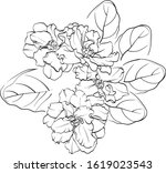 violet flower drawn by lines.... | Shutterstock .eps vector #1619023543