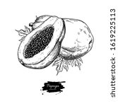 papaya vector drawing. hand...   Shutterstock .eps vector #1619225113