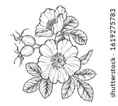 wild rose flowers and berries ... | Shutterstock .eps vector #1619275783