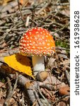 Amanita Muscaria Also Known As...