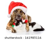 Stock photo cat and dog with santa claus hat isolated on white background 161985116