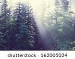 sunny beams in forest | Shutterstock . vector #162005024