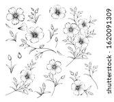 set of linum flower elements.... | Shutterstock .eps vector #1620091309