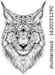 Lynx Head Portrait Animal...