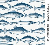 fish seamless pattern. hand... | Shutterstock .eps vector #1620351673