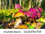 Mushroom In Autumn Forest Scen...