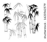 set of tropical bamboo elements.... | Shutterstock .eps vector #1620562579