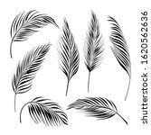 palm tree leaves collection.... | Shutterstock .eps vector #1620562636