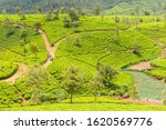 Hill Country Tea Plantation In...