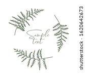 vector illustration of bracken. ... | Shutterstock .eps vector #1620642673