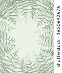 vector illustration of bracken. ... | Shutterstock .eps vector #1620642676
