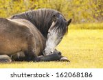 Sleeping Horse On Nature
