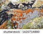 The Old Granite Stone In The...