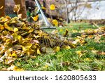 Small photo of raking leaves with fan rake from the lawn