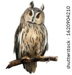Long Eared Owl Sitting On A...