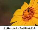 Yellow Flower With A Small...