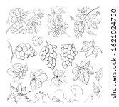 grape bunch collection.... | Shutterstock .eps vector #1621024750