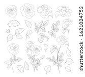 rose bud collection. elements... | Shutterstock .eps vector #1621024753