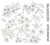 collection of sakura flowers ... | Shutterstock .eps vector #1621024756