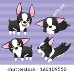 Boston Terrier Puppies  Four...