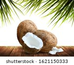 two whole and half  of coconuts ... | Shutterstock .eps vector #1621150333
